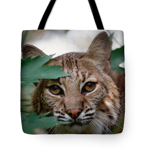 Bobcat With Maple Leaves Tote Bag