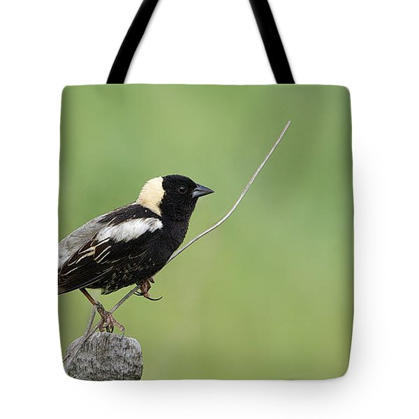 Tote Bag featuring the photograph Bobolink - Goglu - Dolichonyx Oryzivorus by Nature and Wildlife Photography