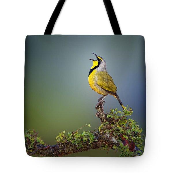 Bokmakierie Bird - Telophorus Zeylonus Tote Bag