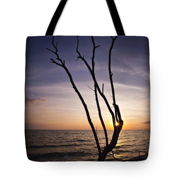 Bonita Beach Tree Tote Bag by Bradley R Youngberg