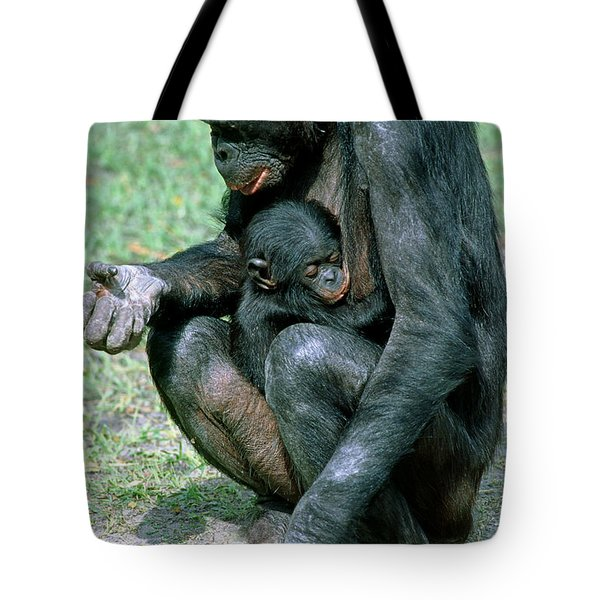 Bonobo Pan Paniscus Nursing Tote Bag by Millard H. Sharp