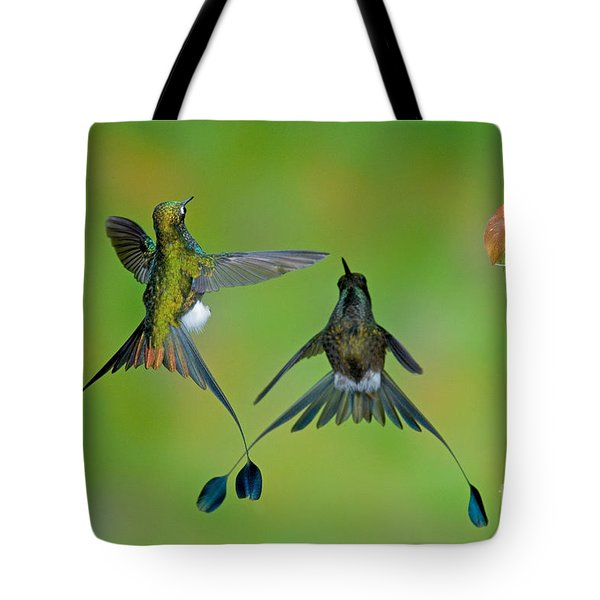 Booted Racket-tail Hummingbird Males Tote Bag by Anthony Mercieca