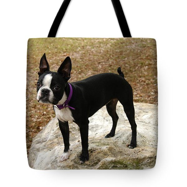 Boston Terrier On The Rock Tote Bag