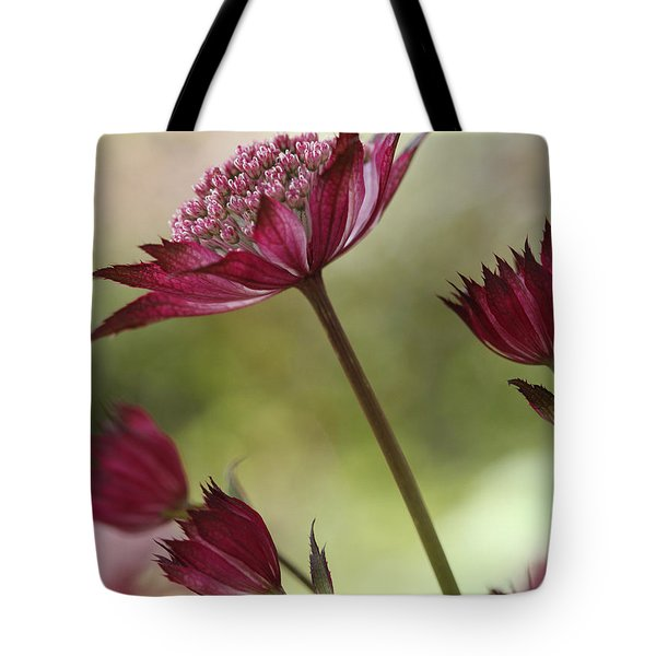 Botanica Tote Bag by Connie Handscomb