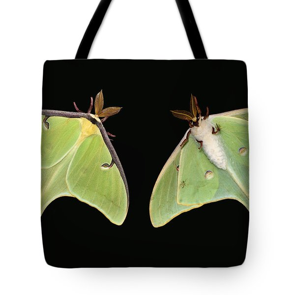 Both Sides Now Tote Bag by Kristin Elmquist