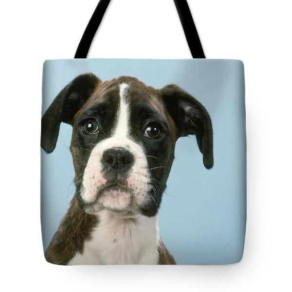 Boxer Dog, Close-up Of Head Tote Bag by John Daniels