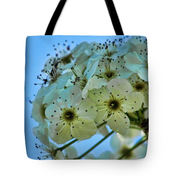 Bradford Pear I Tote Bag