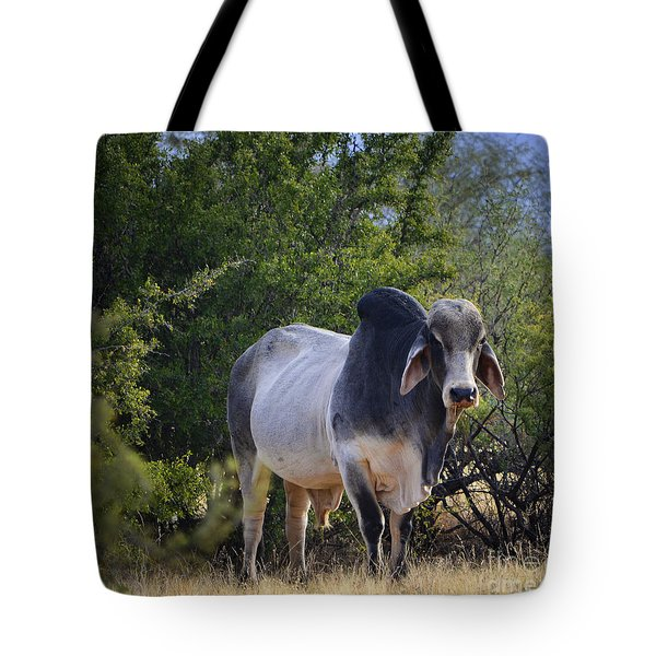 Brahma Cow Tote Bag