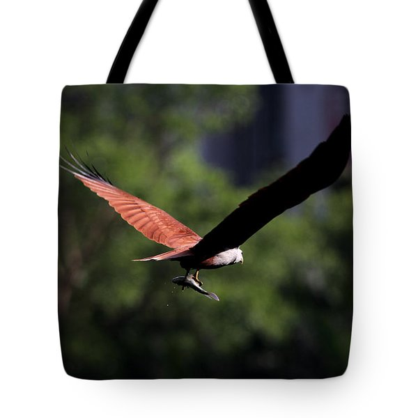 Brahminy Kite With Catch  Tote Bag