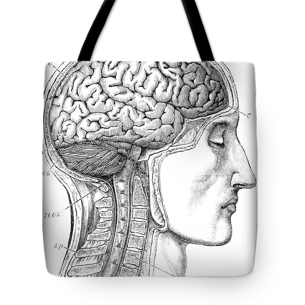 Brain From Right Side, 1883 Tote Bag