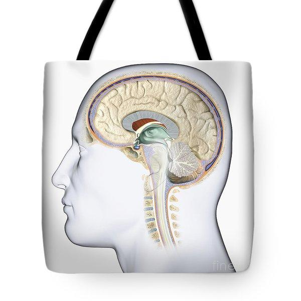 Brain In Cross Section Tote Bag