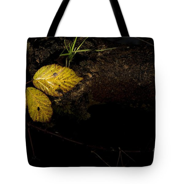 Bramble Tree Tote Bag by Anne Gilbert