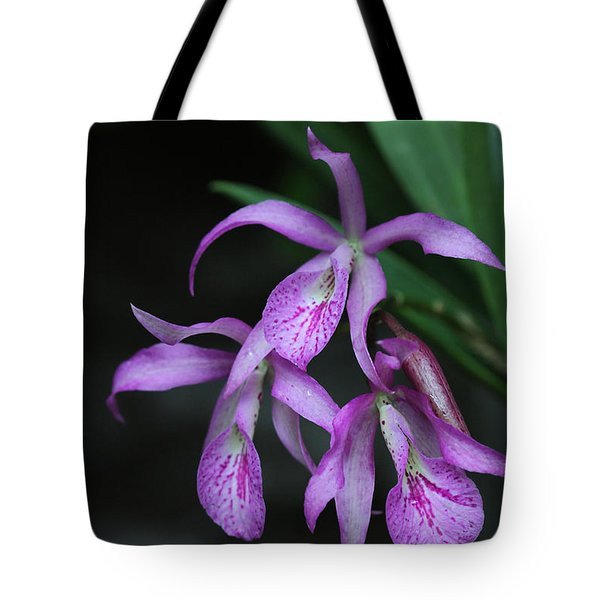 Brassanthe Maikai Orchid Tote Bag