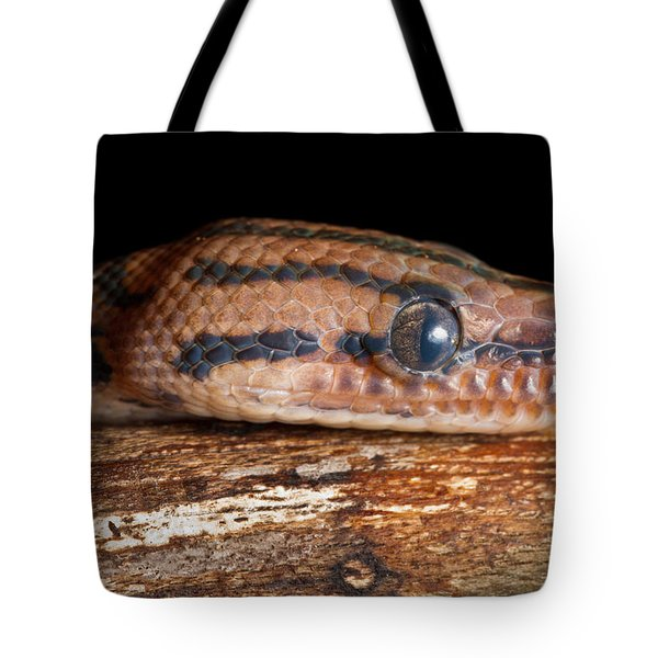 Tote Bag featuring the photograph Brazilian Rainbow Boa Epicrates Cenchria by David Kenny