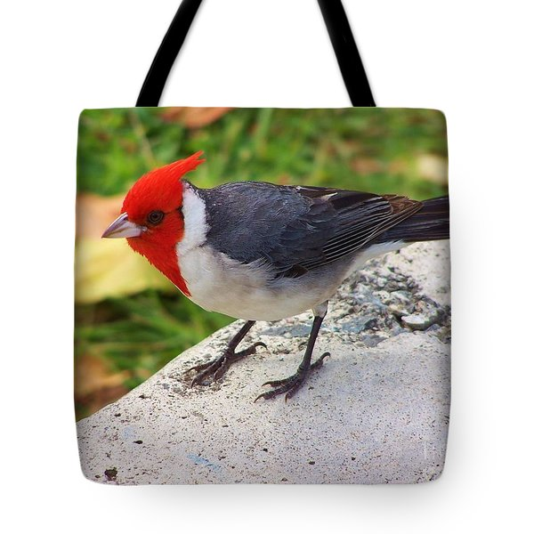 Brazilian Red Capped Cardinal Tote Bag