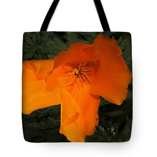 Bright California Poppy Tote Bag by Phyllis Denton