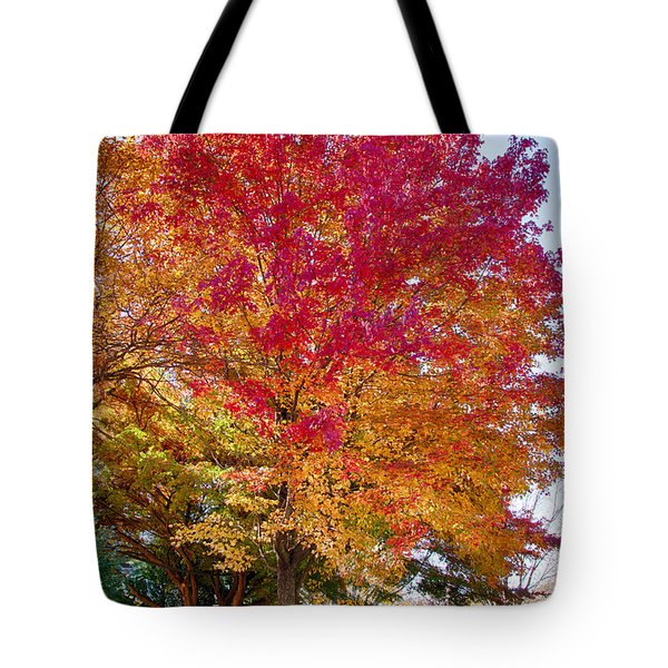 brilliant autumn colors on a Marblehead street Tote Bag