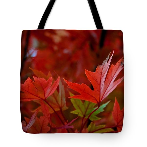 Brilliant Red Maples Tote Bag by Linda Unger