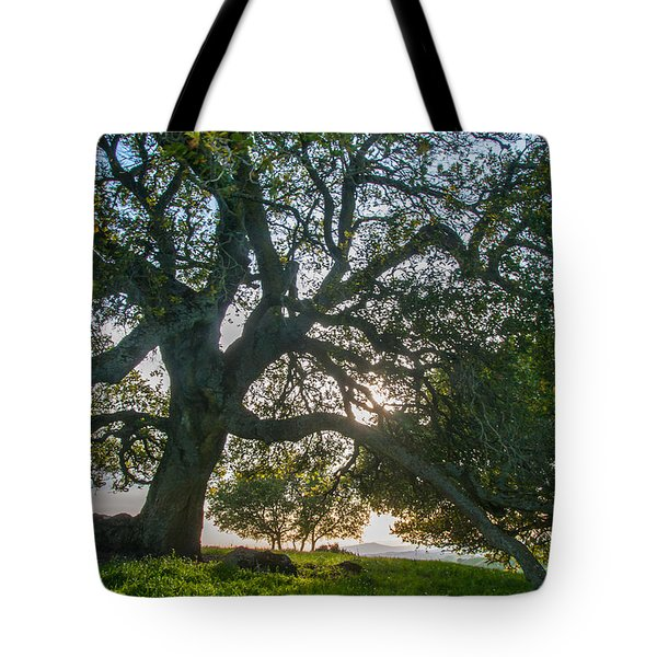 Briones Oak Tote Bag by Marc Crumpler