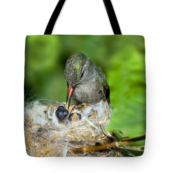 Broad-billed Hummingbird And Young Tote Bag by Anthony Mercieca