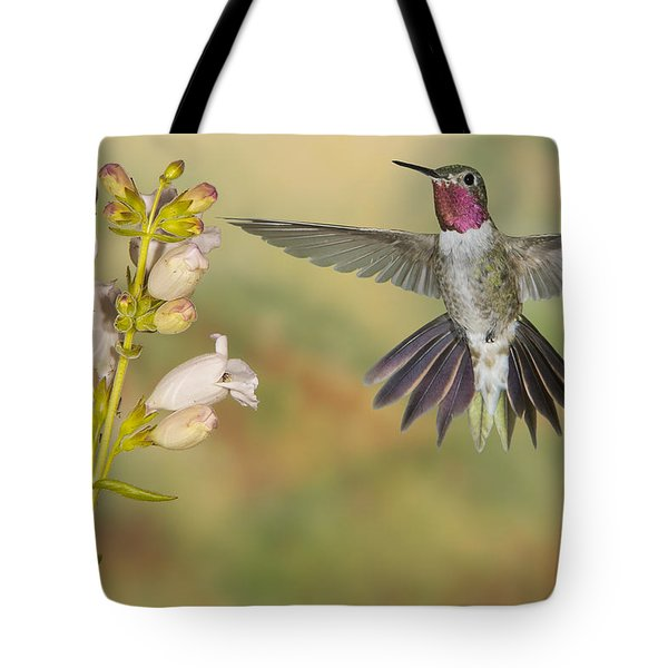 Broad Tailed Hummingbird 2 Tote Bag