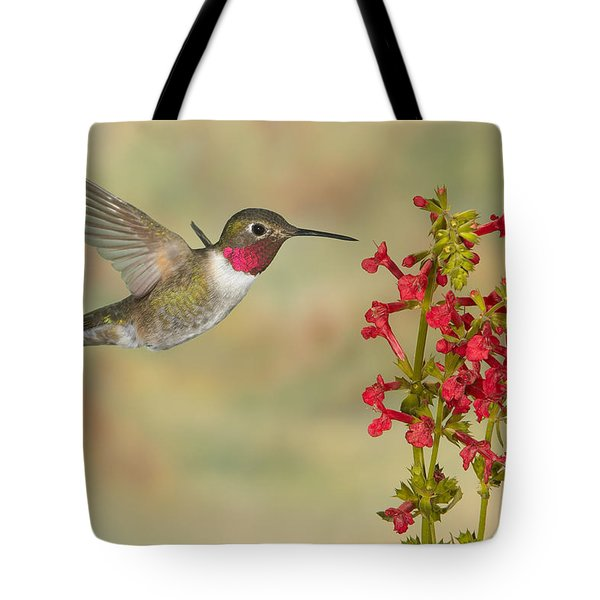 Broad-tailed Hummingbird 5 Tote Bag