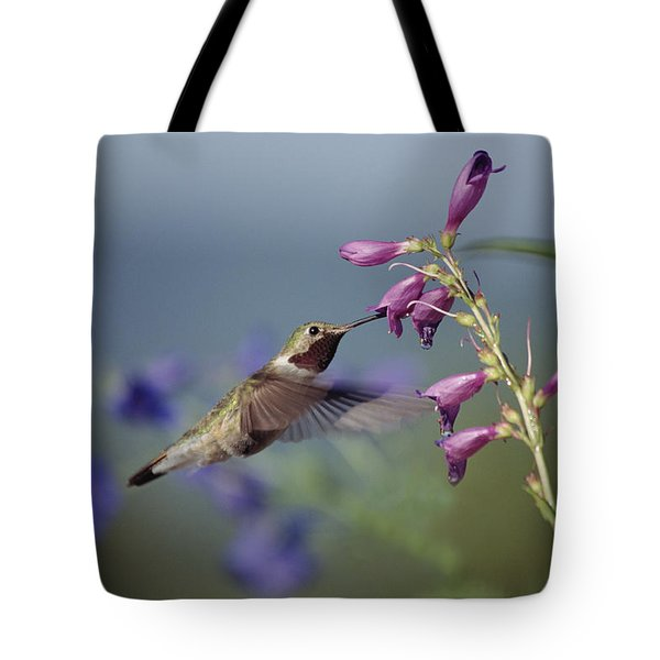 Broad-tailed Hummingbird Feeding New Tote Bag