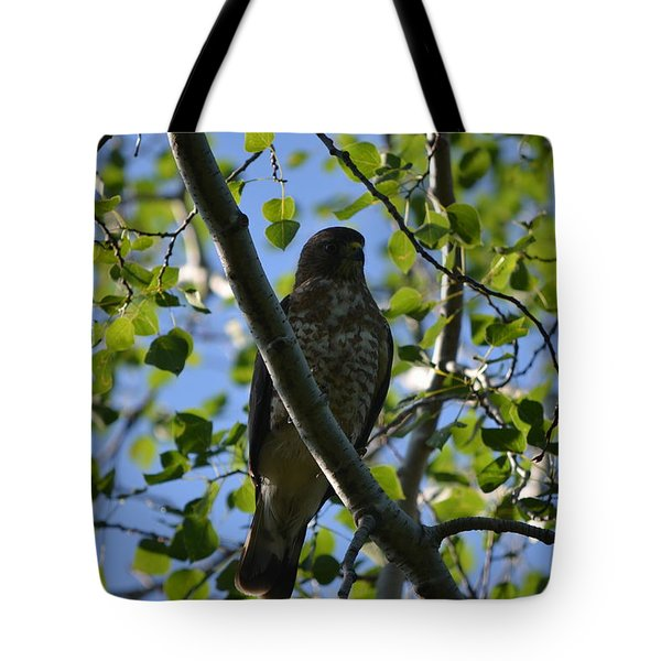 Tote Bag featuring the photograph Broad-winged Hawk by James Petersen