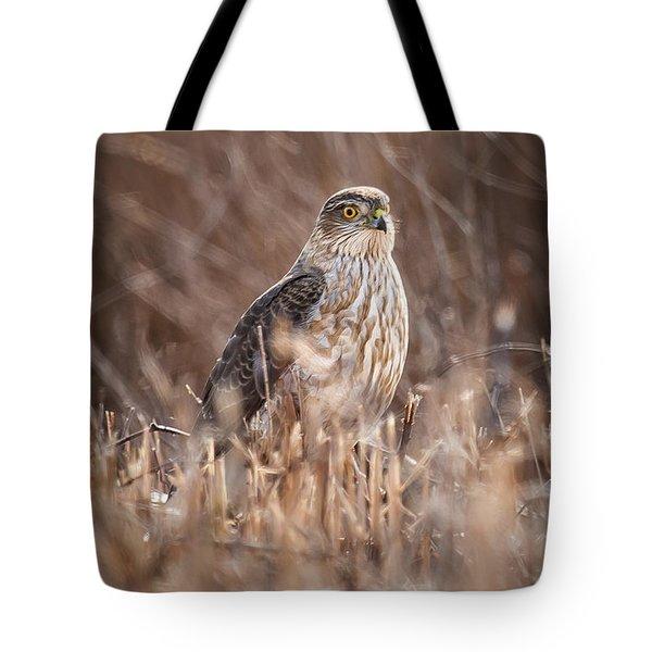 Broad-winged Hawk Tote Bag
