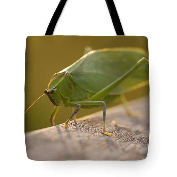 Broad-winged Katydid Tote Bag