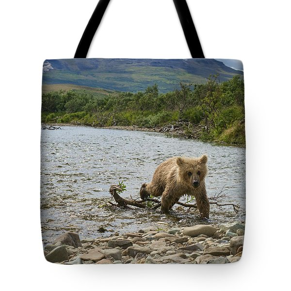 Brown Bear Cub Walking Up Stream Trying Keep Up With Mom Tote Bag by Dan Friend