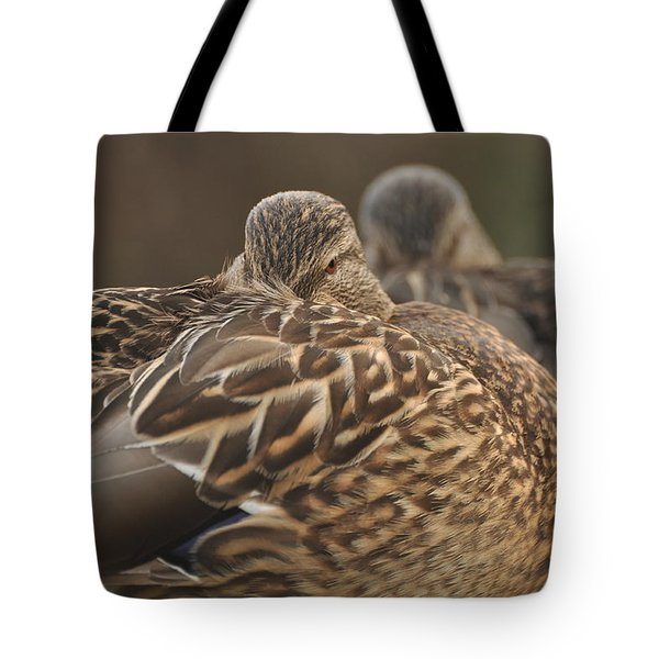 Tote Bag featuring the photograph Brown Beauty  by Sabine Edrissi