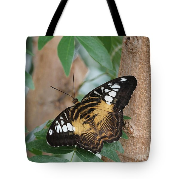 Tote Bag featuring the photograph Brown Clipper Butterfly #5 by Judy Whitton