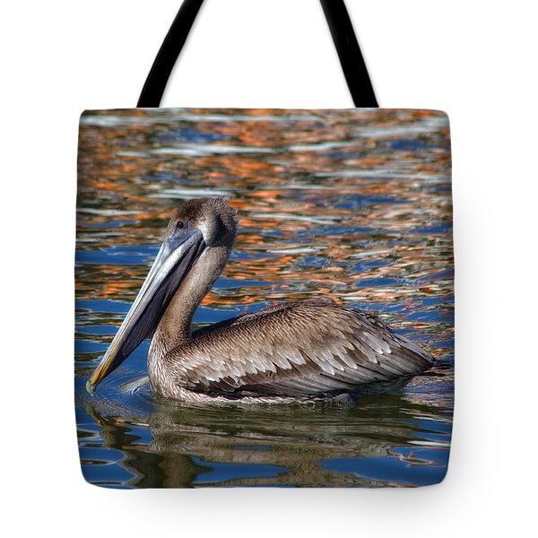 Brown Pelican - Florida Tote Bag by Kim Hojnacki