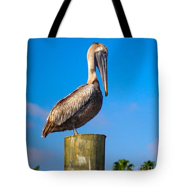 Tote Bag featuring the photograph Brown Pelican - Pelecanus Occidentalis by Carsten Reisinger