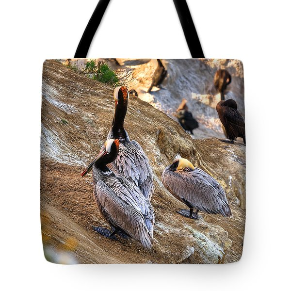Brown Pelicans At Rest Tote Bag by Jim Carrell