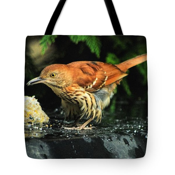 Brown Thrasher Tote Bag by Dennis Baswell