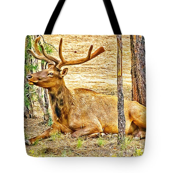 Browsing Elk In The Grand Canyon Tote Bag by Bob and Nadine Johnston