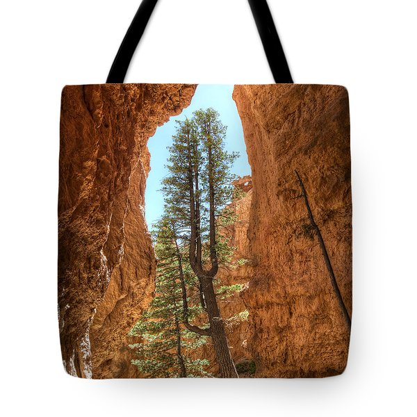 Tote Bag featuring the photograph Bryce Canyon Trees by Tammy Wetzel