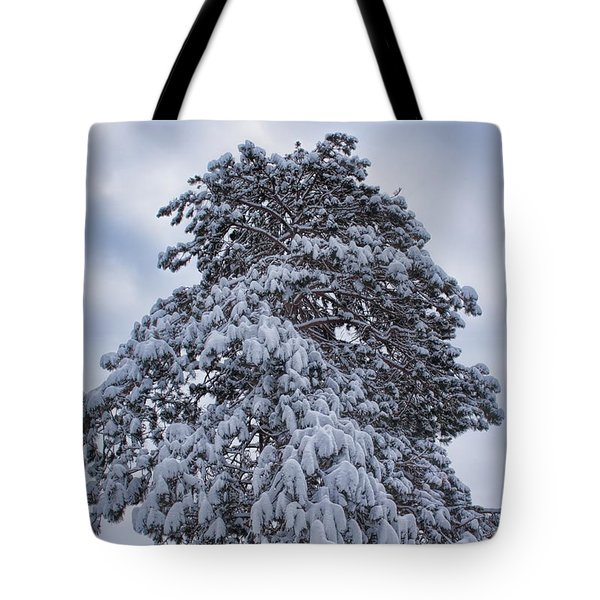 Tote Bag featuring the photograph Buck Lake Flocked Pine by Dale Kauzlaric