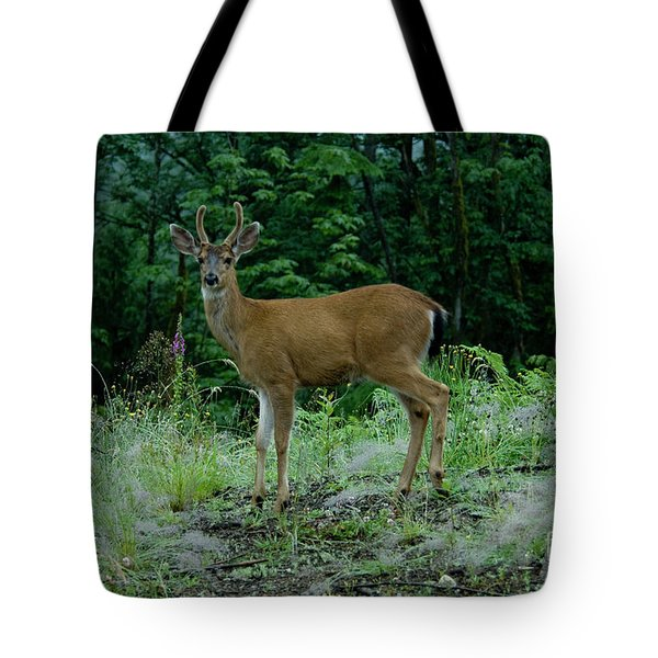 Tote Bag featuring the photograph Buck by Rod Wiens