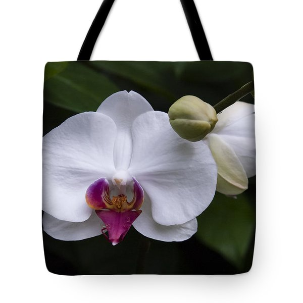 Tote Bag featuring the photograph Bud And Bloom II by Penny Lisowski