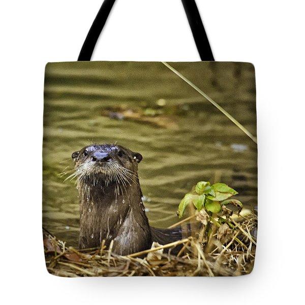 Buffalo National River Otter  Tote Bag