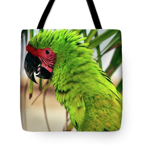 Buffons Macaw, Portrait Profile Tote Bag
