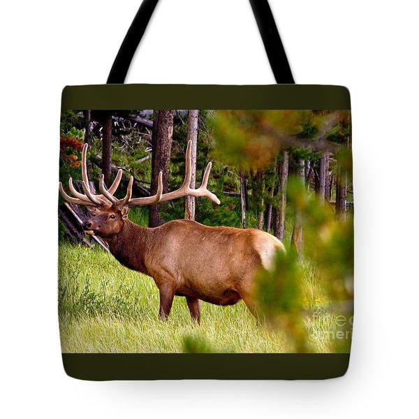 Bull Elk Tote Bag by Bill Gallagher