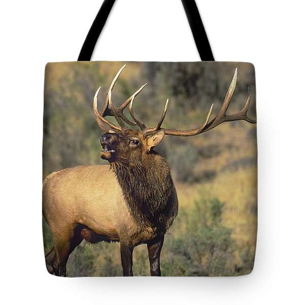 Tote Bag featuring the photograph Bull Elk In Rut Bugling Yellowstone Wyoming Wildlife by Dave Welling