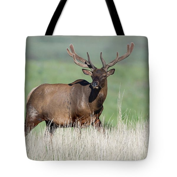 Tote Bag featuring the photograph Bull Elk In Velvet by Jack Bell