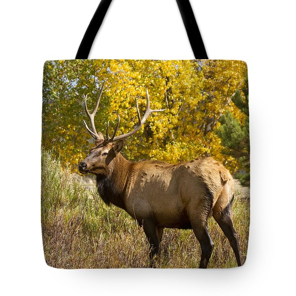 Bull Elk With Autumn Colors Tote Bag by James BO  Insogna