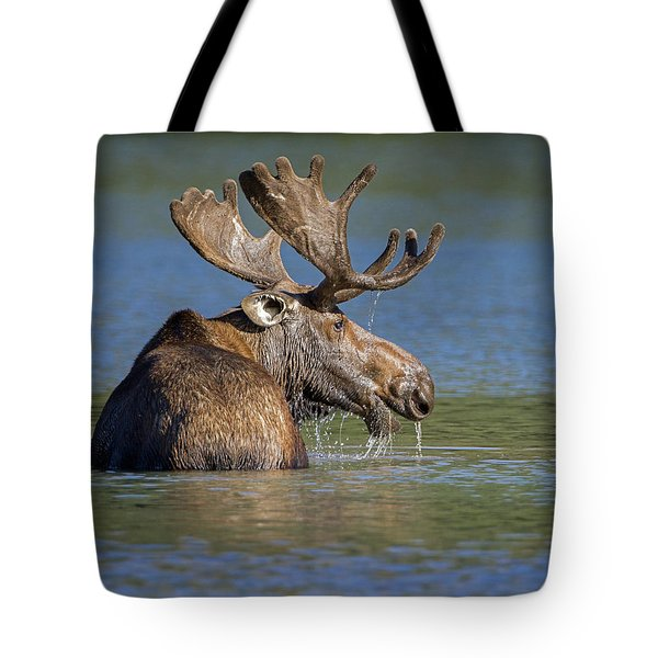 Tote Bag featuring the photograph Bull Moose At Fishercap by Jack Bell