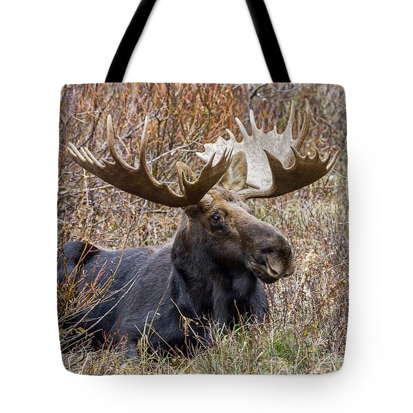 Bull Moose In Autumn Tote Bag by Jack Bell